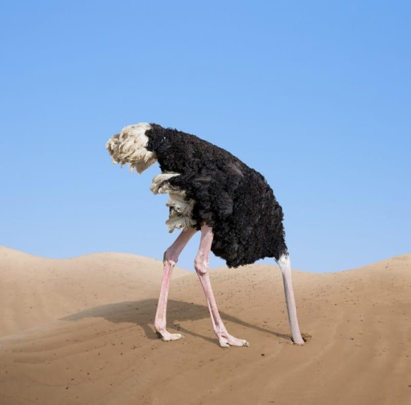 יען - ראש בחול ואין צרות